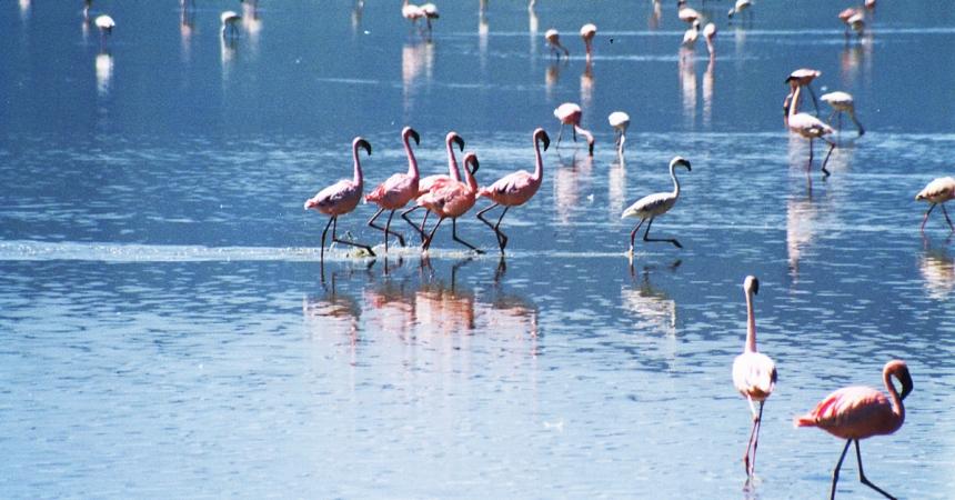 flamingos2